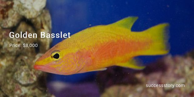 13 most expensive tropical fish ever sold successstory for Most expensive fish