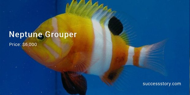 13 most expensive tropical fish ever sold successstory for Most expensive saltwater fish