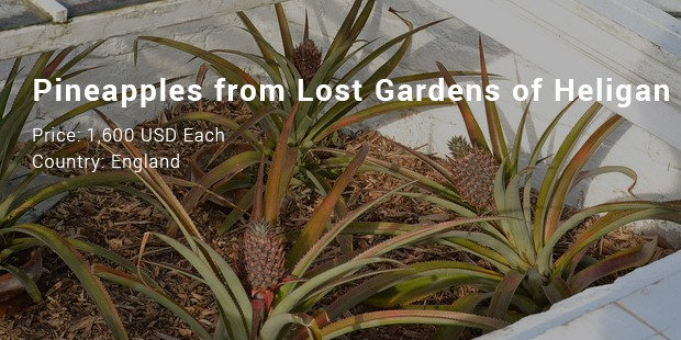 pineapples from lost gardens of heligan
