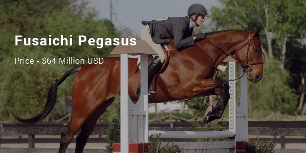 the fusaichi pegasus