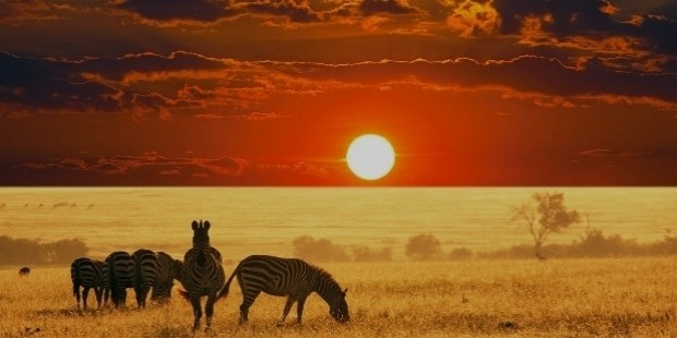 african safari sunset