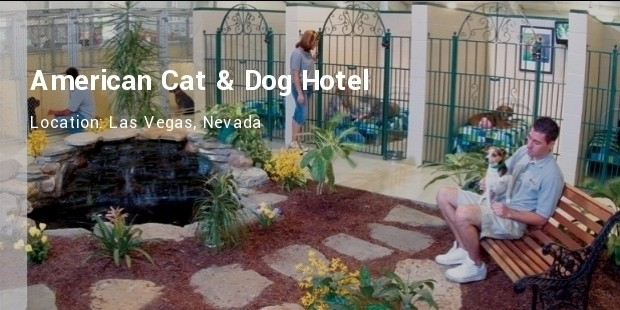 america cat and dog hotel