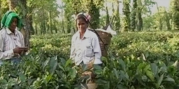 assam tea workers 650
