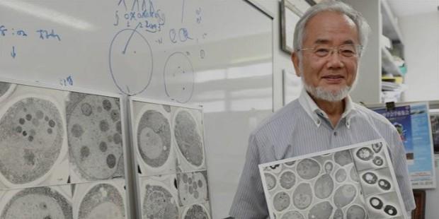 Yoshinori Ohusmi Lab