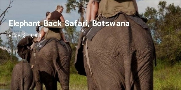back safari botswana