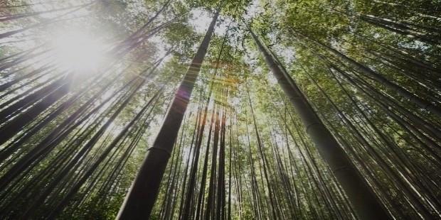 bamboo 364112
