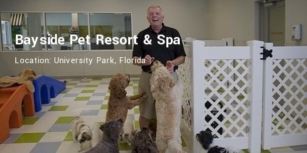bayside pet resort