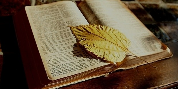 bible 1166260