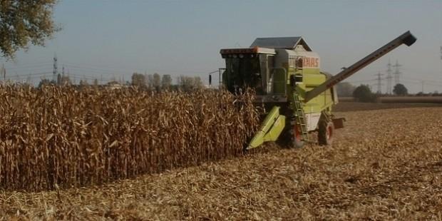 corn 837815