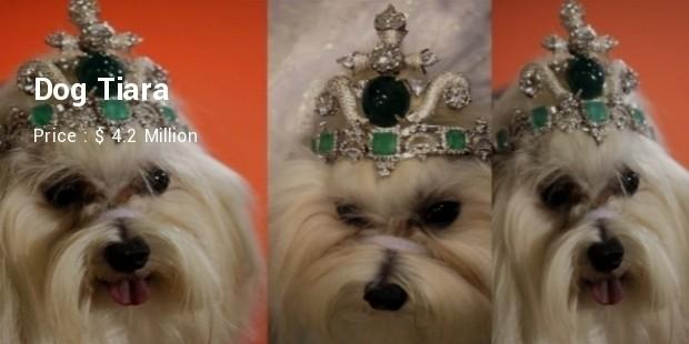dog tiara1