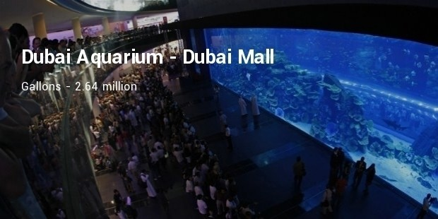 dubai aquarium at the dubai mall