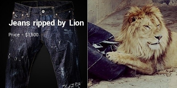 jeans ripped by lion