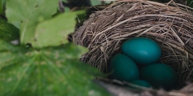 nest 843231
