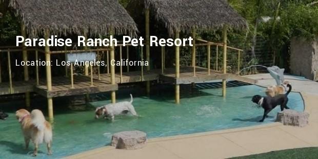 paradise ranch pet resort