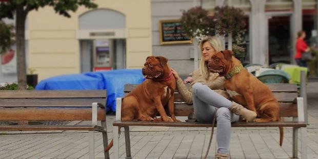 pets improve social relationships