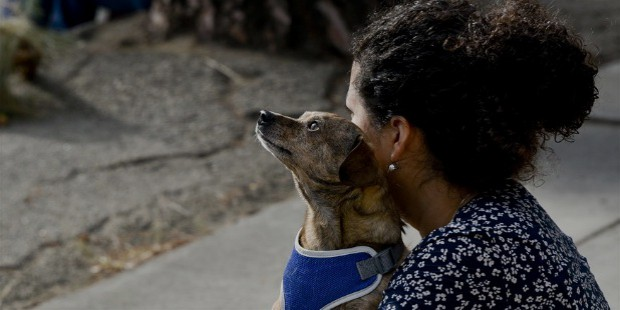 pets keeps you engagaed