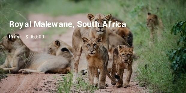 royal safari1