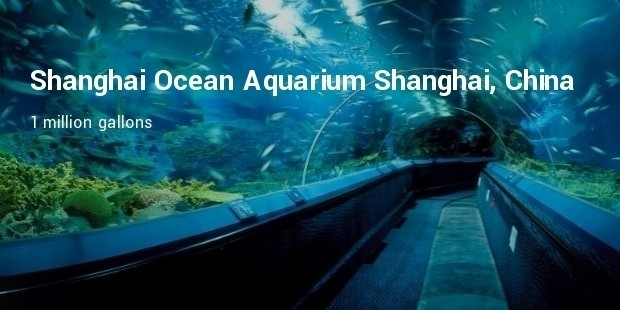 shanghai ocean aquarium  shanghai, china