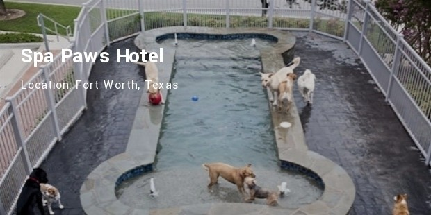 spa paws hotel