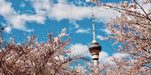 spring 3