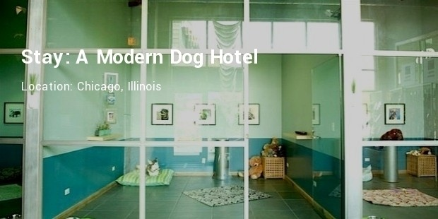 stay modern dog hotel