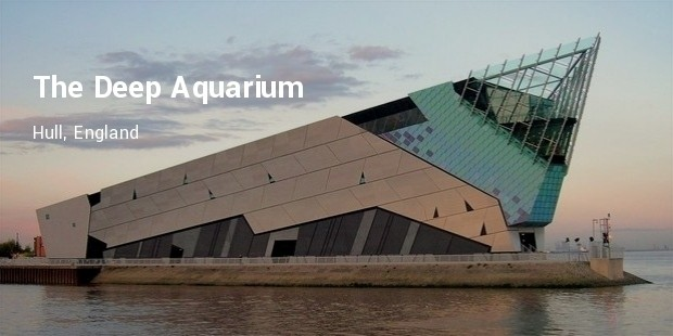the deep aquarium