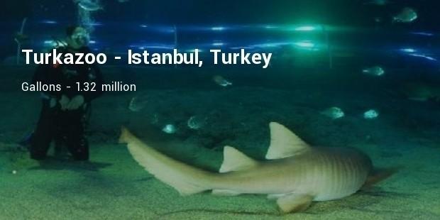 turkuazoo underwater