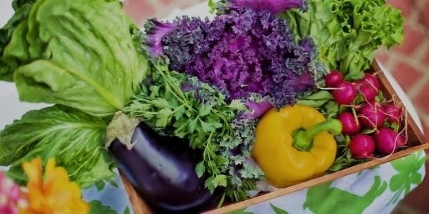 vegetables 790022
