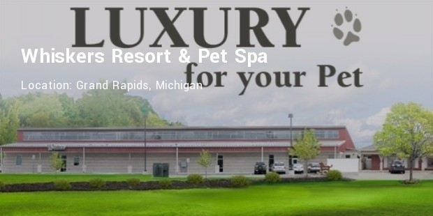 whiskers resort and spa