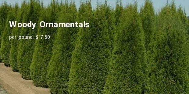 woody ornamentals