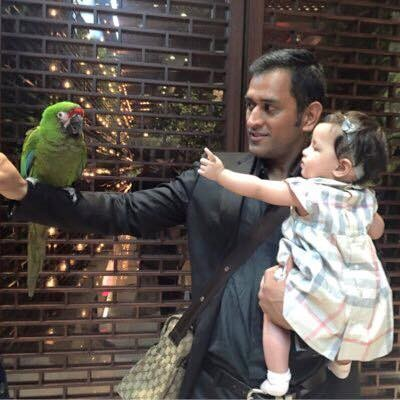 Mahi and His Cute Baby Ziva Playing Together