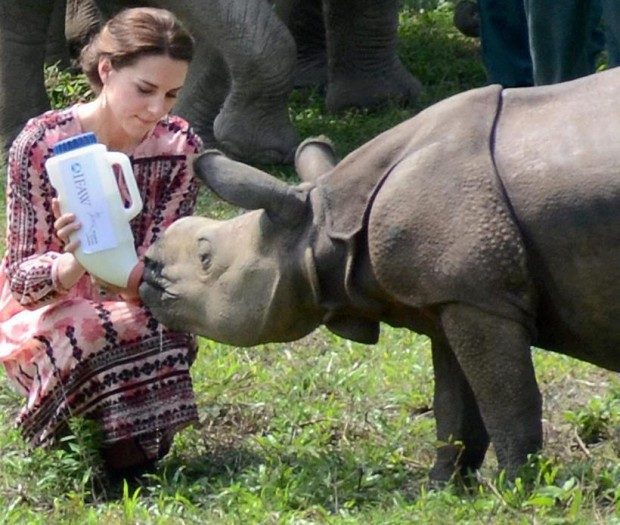 Duchess of Cambridge feeds a rhino calf during India Tour