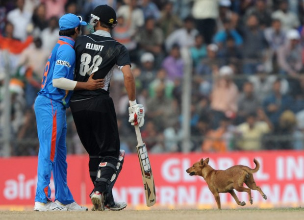 Raina and Kiwis Batsman Elliott watching a dog on the field
