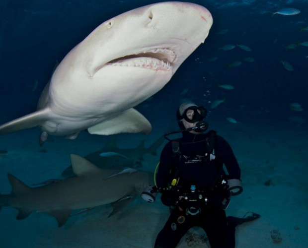 Richard Branson swimming with a Tiger Shark