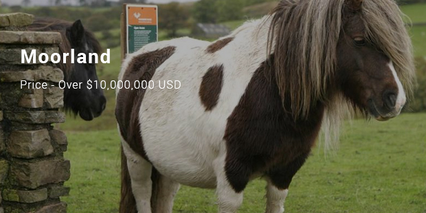 Most Expensive Horses