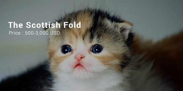 13 Most Expensive Cats in the World