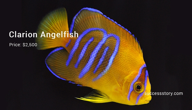 Most expensive tropical fishes ever sold for Most expensive aquarium fish